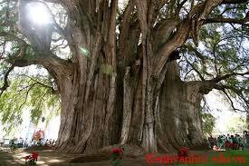 Viết đoạn văn tả một loài cây mà em yêu thích