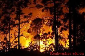 Bản tin về khu rừng Hoa Mai