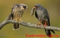 chim chích và chim sẻ
