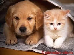 ngoại hình của chó và mèo