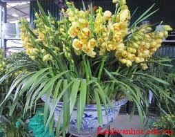 loài hoa em thích-hoa địa lan