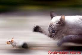 Mèo-Một loại vật nuôi trong nhà