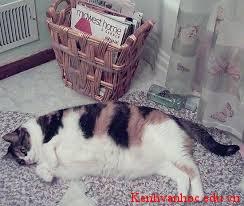 con mèo nhà em