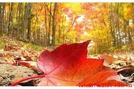 Đây mùa thu tới