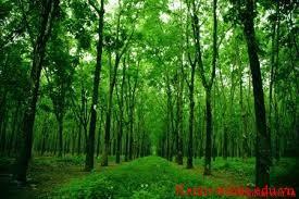 kẻ thù của rừng xanh