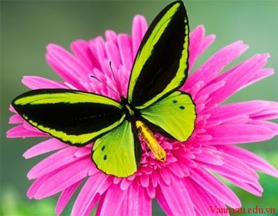 Em hãy miêu tả con bươm bướm