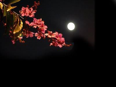 cảnh đêm trăng