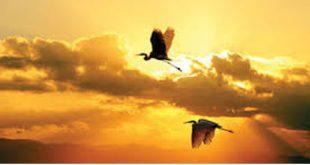 Phân tích bài thơ chiều tối của hồ chí minh