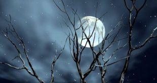 Phát biểu cảm nghĩ về bài thơ cảnh khuya